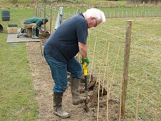 Hedge Planting - March 2014